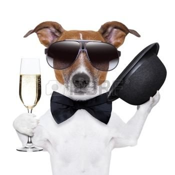 18023444-cheers-dog-with-a-glass-of-champagne-and-a-black-hat.jpg